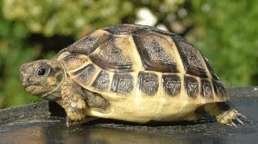 Kaplumbağaların kabuklarının sırrı nedir ?