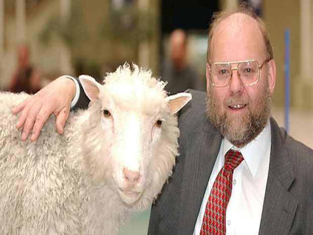 Koyun Dolly'nin ölüm nedeni açıklığa kavuştu